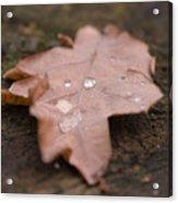 Dead Leaf Acrylic Print