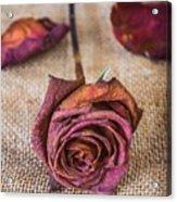 Dead Rose Acrylic Print