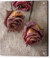 Dead Roses Acrylic Print