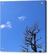 Dead Tree And Two Clouds Acrylic Print