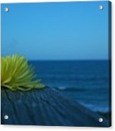 Decked Out Acrylic Print