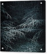 Deep In Woods Acrylic Print