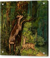 Deer In The Forest, 1868 Acrylic Print