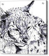 Deer Tiger Acrylic Print