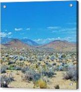 Desert Comfort Acrylic Print