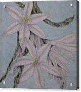 Desert Lillie Acrylic Print