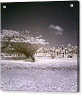 Desertic Landscape Acrylic Print
