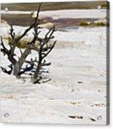 Desolate Acrylic Print