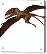 Dimorphodon On White Acrylic Print
