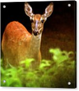 Doe Eyes Acrylic Print