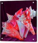 Dog Shell Acrylic Print by Arlin Jules