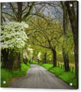 Dogwood Trail, Smoky Mountain, Tennessee Acrylic Print