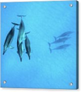 Dolphins At Rest Acrylic Print
