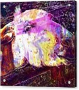 Donkey Livestock Beast Of Burden  Acrylic Print