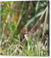 Dragon Fly Acrylic Print
