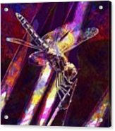 Dragonfly Insect Close  Acrylic Print