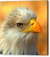 Eagle 10 Acrylic Print by Marty Koch