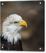 Eagle Profile Acrylic Print
