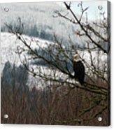 Eagle Watching Acrylic Print