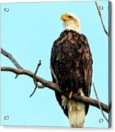 Eagle's View Acrylic Print