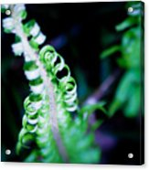 Early Fern Acrylic Print