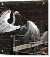 Egret 43 Acrylic Print