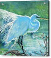 Egret In The Summer Breeze  Acrylic Print