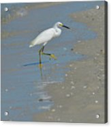 Egret Walking Up The Beach Acrylic Print