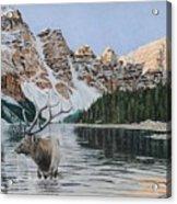 Elk In Moraine Lake Acrylic Print