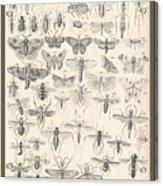 Entomology Acrylic Print