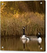 Evening By The Pond Acrylic Print