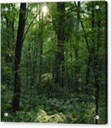 Evening Woods Acrylic Print