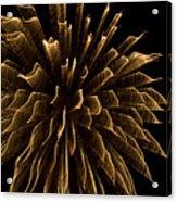 Explosive Flowers 1 Acrylic Print