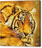 Eye Of The Tiger Acrylic Print