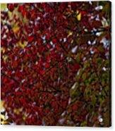 Fall 2010 10 Acrylic Print