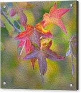 Fall Color Acrylic Print
