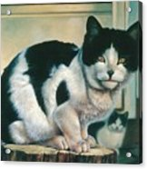 Farm Cat Acrylic Print