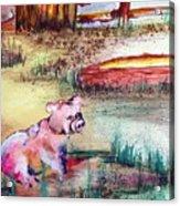 Farm Piggy Acrylic Print