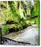 Fern Canyon, Redwood National Park Acrylic Print