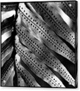 Fern Spores Acrylic Print