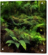 Ferns Of The Forest Acrylic Print