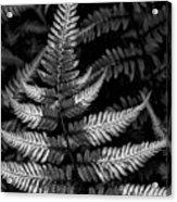 Ferns Acrylic Print