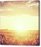Field, Countryside At Sunset. Harvest Time. Vintage Acrylic Print