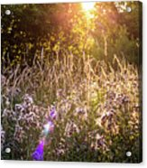 Field Faeries Acrylic Print