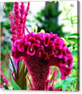 Field Flowers And Critters Acrylic Print