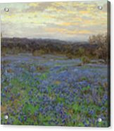 Field Of Bluebonnets At Sunset Acrylic Print