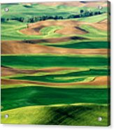 Field Of Green Acrylic Print