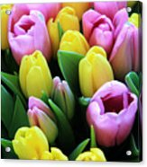Field Of Tulips Acrylic Print