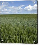 Field Of Wheat Acrylic Print