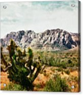 Field Yucca Acrylic Print